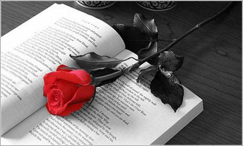 Aviso a navegantes: Algunas mujeres preferimos el libro a la rosa. O las dos cosas.